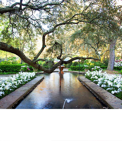 tree hanging over flowers and water feature in Bellingrath Gardens